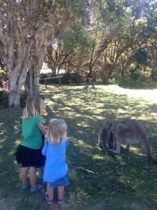 Getting up close to wild kangaroos