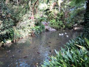 b-pond