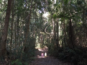 The canopy rises tall above the bush track