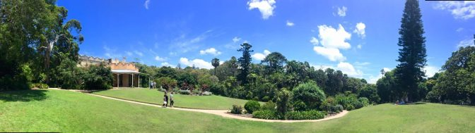 Oasis in the Eastern Suburbs
